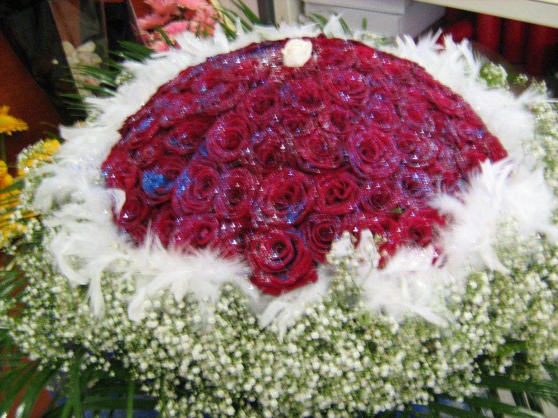 Piante e fiori la fioreria di ambrosio francesco via for Piante e fiori